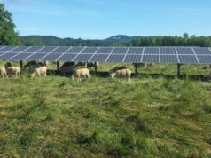 Instalare panouri solare pe teren agricol